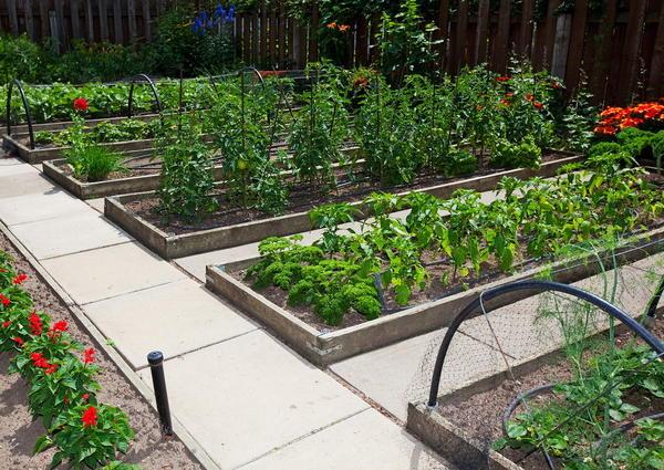 Огород можно организовать по-разному