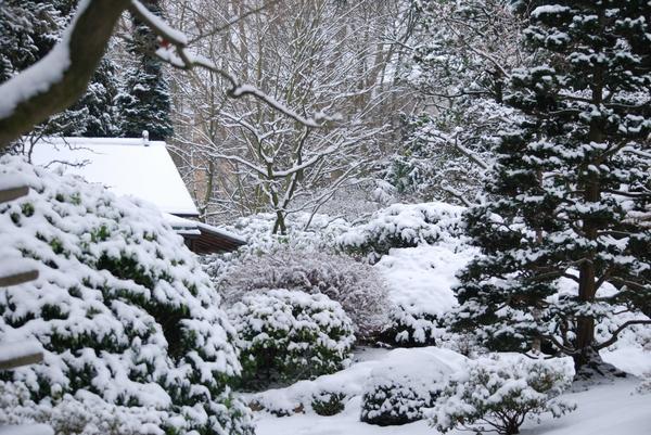 Садоводы по-прежнему спорят о правильных методах зимнего укрытия растений