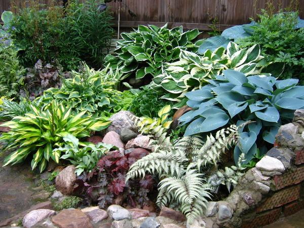 Декоративно-лиственные растения с разнообразной по форме, цвету и фактуре листвой составляют впечатляющие композиции