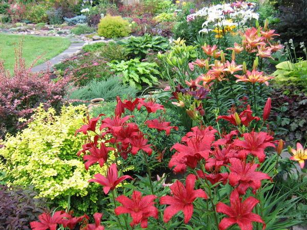 Выбирая место для нового растения, представьте, как оно будет выглядеть в момент цветения