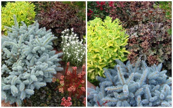 Композиции с хвойными растениями украшают сад до самого снега