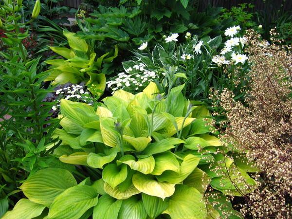 Белый, зеленый - связующие цвета, помогающие смягчать и уравновешивать яркие контрасты