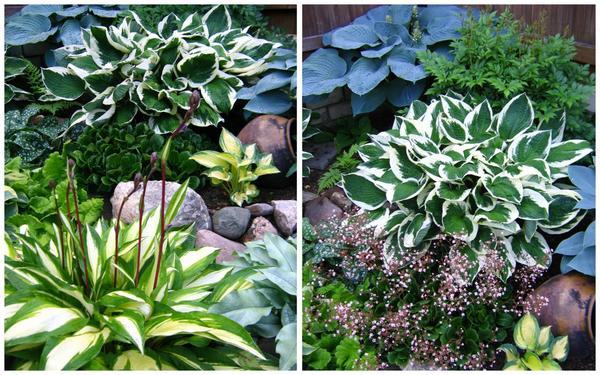 В садовом дизайне используют как контраст цвета, так и контраст форм