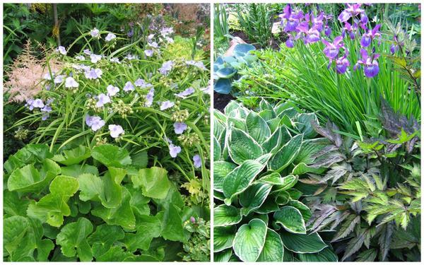 Сочетая растения с листьями разных форм, размеров, фактуры, можно добиться великолепного эффекта