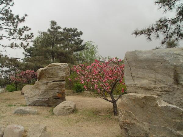 Китайский сад - создание мира природы в миниатюре