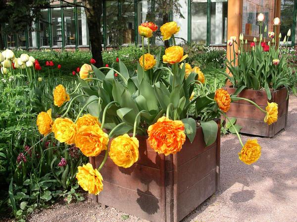 Чтобы растения в контейнерах хорошо росли и пышно цвели, необходимы удобрения