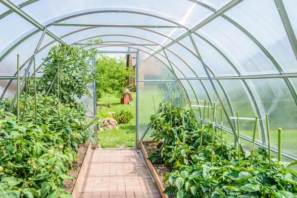 Теплолюбивым овощным культурам необходима теплица