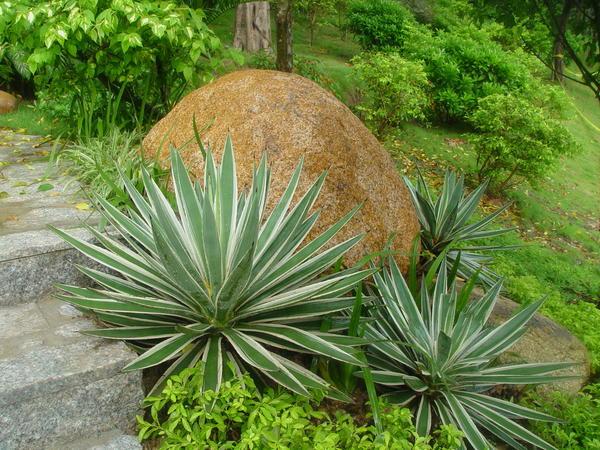 Камню в китайском саду отводится важное место
