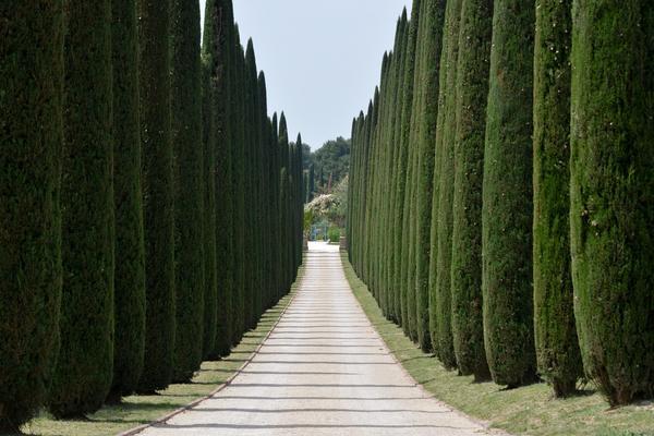 Такие посадки годятся только для больших садов: обсаженная высокими кипарисами дорожка кажется узкой