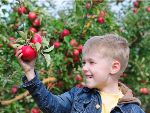 Плодовые деревья от Поиска - на радость садоводам