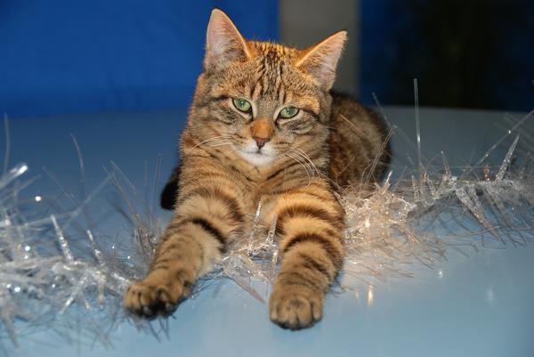 Мишура коту не игрушка!