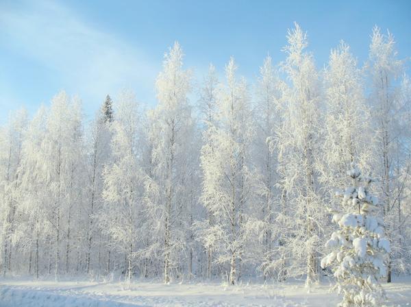 Январь - самый морозный месяц