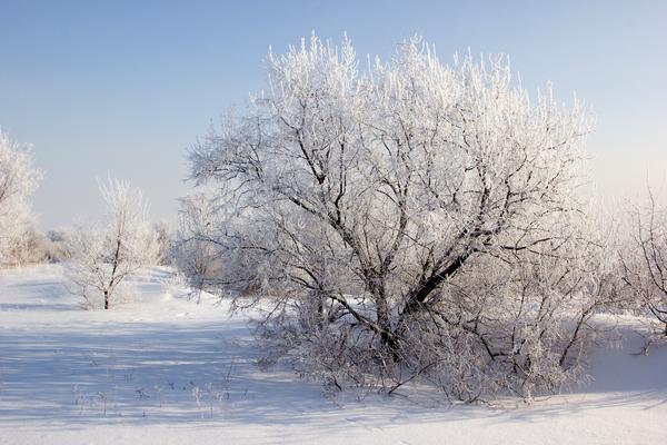 Обильный иней - к солнечной, но холодной погоде