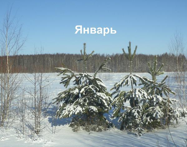 Январь - месяц студеный
