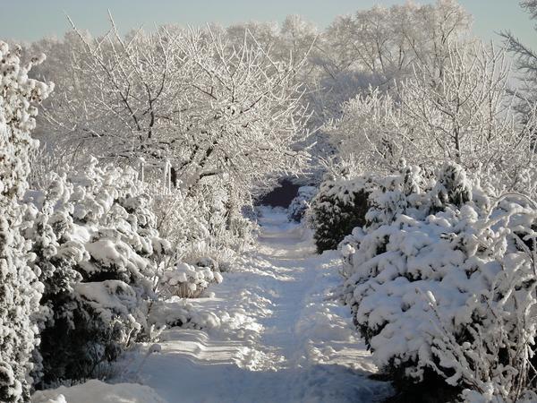 Если дорожку с обеих сторон окружают плотные насаждения, почистить снег сложно