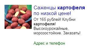 Диво дивное - саженцы картофеля
