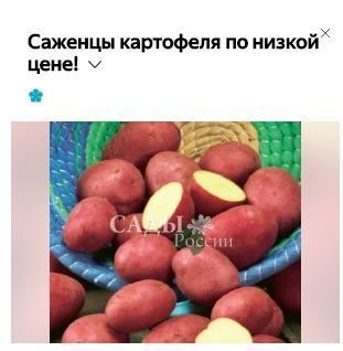 Картофель-то хороший... Но почему саженцы?
