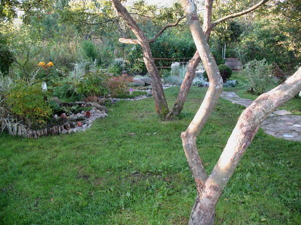 Находясь внутри сада, мы не можем оценить форму кроны, зато можем полюбоваться причудливо изогнутыми стволами