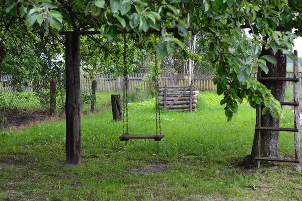 Яблоня - семейное, родовое дерево