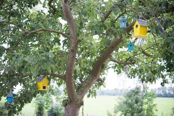 Птичьи домики и кормушки на яблоне