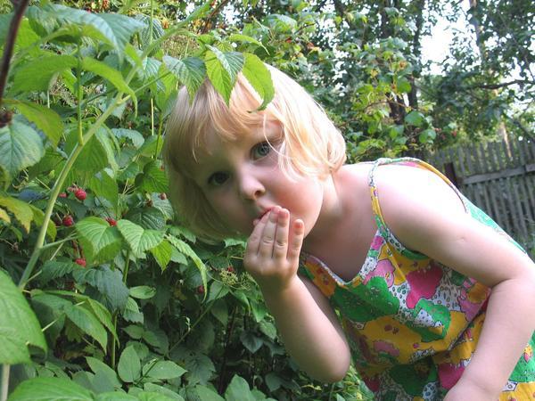 Растения, у которых есть плоды или ягоды, лучше выращивать в саду