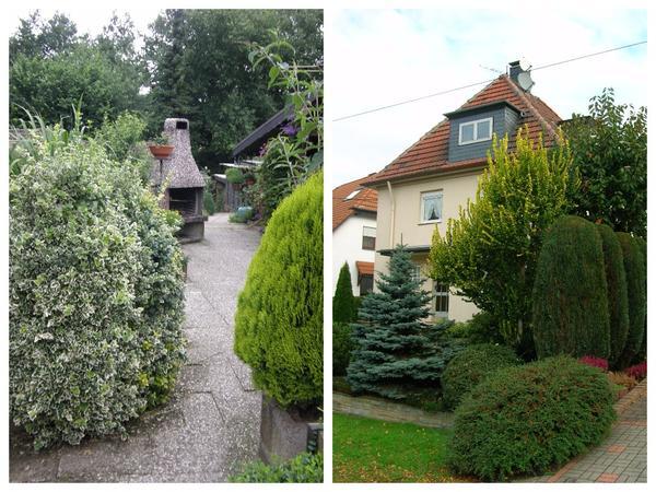Зона отдыха с барбекю и обилие хвойных - характерные приметы немецкого сада