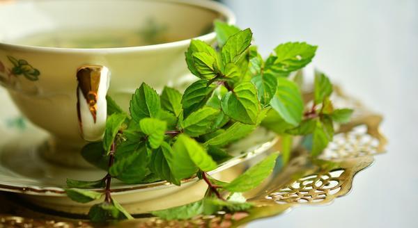 Многие любят чай с мятой