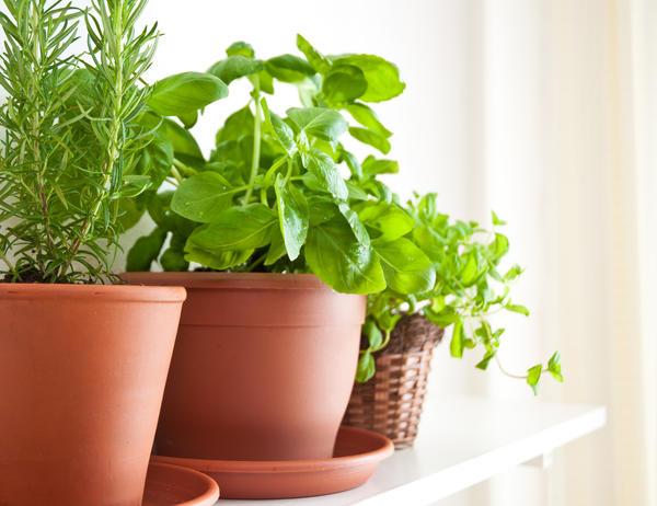 Огород можно создать и в домашних условиях - на балконе или подоконнике