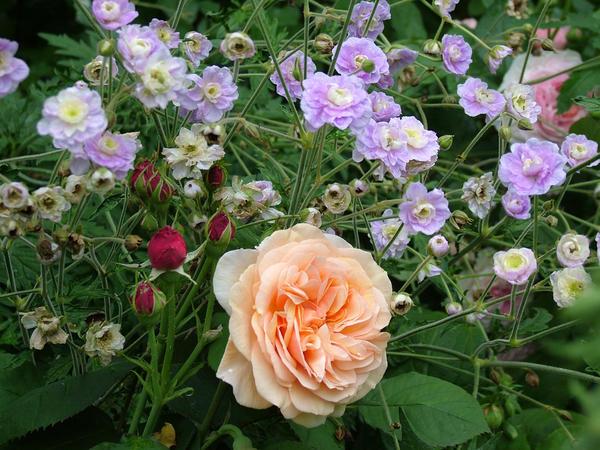 Как подобрать достойное сопровождение для розы?