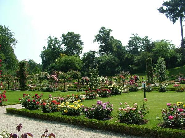 Изумрудно-зеленый газон - лучший фон для роз