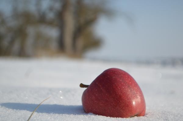 Поможет ли снег уберечь будущий урожай?