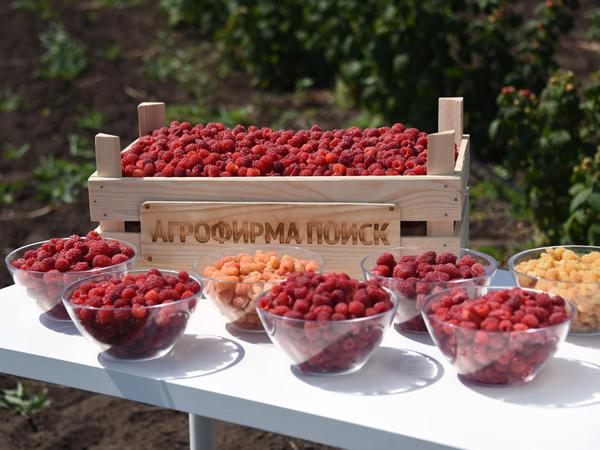 Правильные сорта - хороший урожай