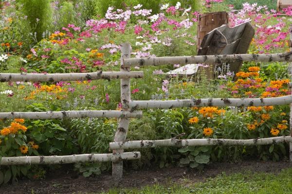 В деревенском стиле: простой забор из березовых жердей