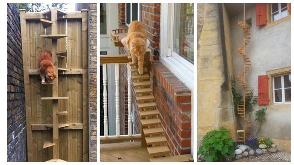 Коты, конечно, хорошо лазают... Но от удобной лестницы вряд ли откажутся
