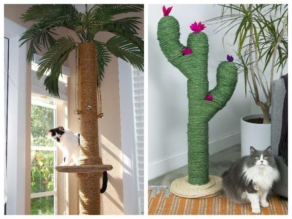 Когтеточка. Она же пальма. Или кактус...