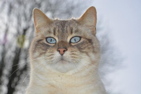 1 марта - Всемирный день котов и кошек