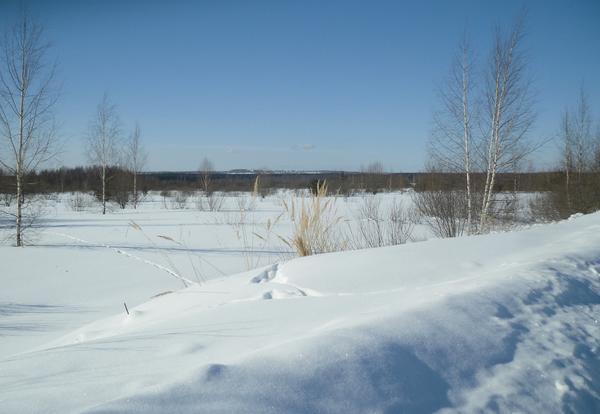 Это только с виду здесь пустынно - на этих необозримых просторах жизнь даже зимой кипит