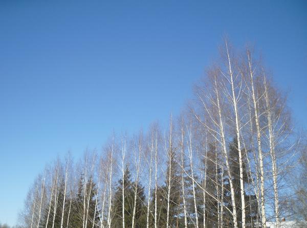 На небо глянешь - ну почти совсем уже весна!