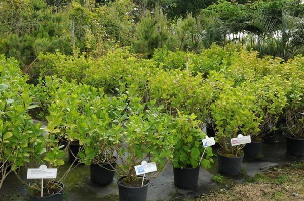 Покупка контейнерных растений не гарантирует отсутствие проблем