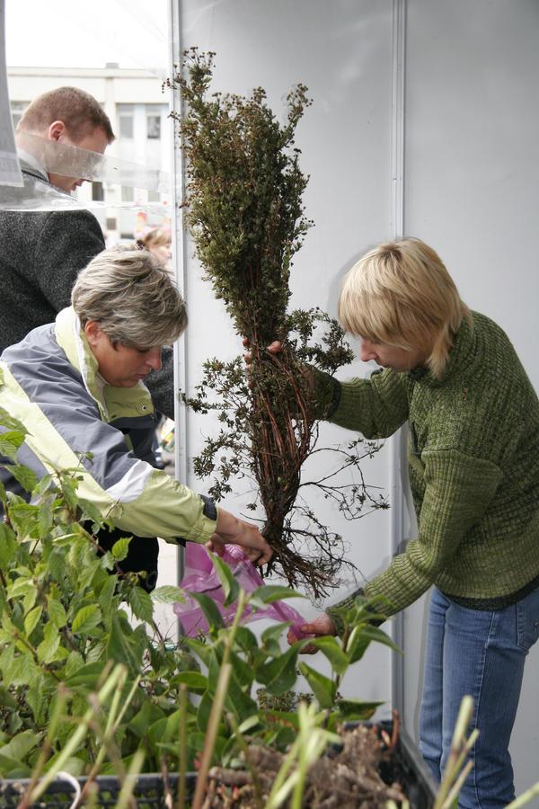 Выбирать нужно то растение, которое имеет корневую систему, способную быстро восстановиться