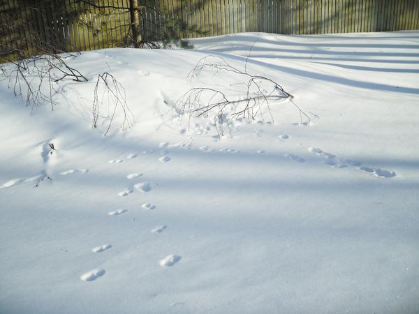 """Кто оставил свой """"автограф"""" на снежном полотне?"""