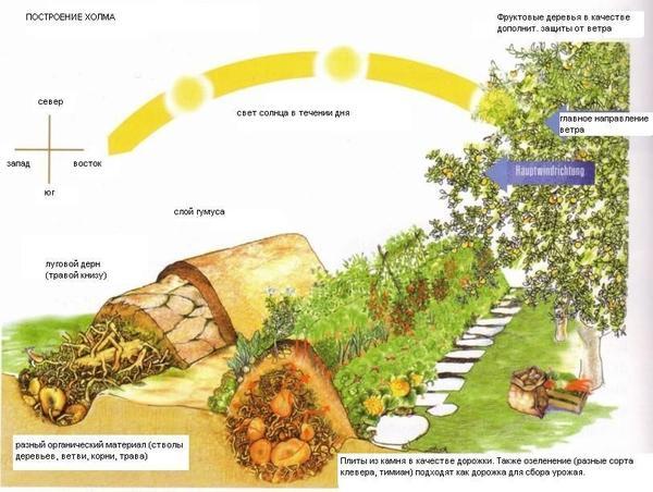 Схема теплой грядки-холма. Изображение с сайта over-blog-kiwi.com