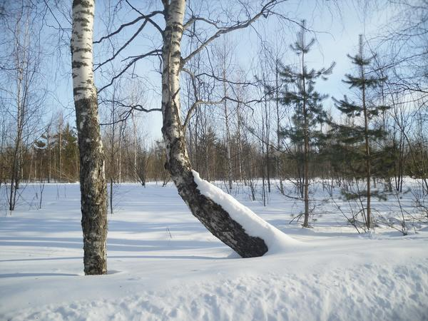 Мороз и солнце - день весенний