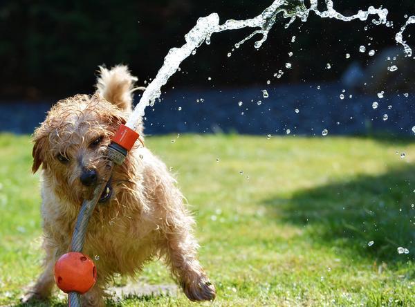 Газону не хватает воды. Срочно поливать!
