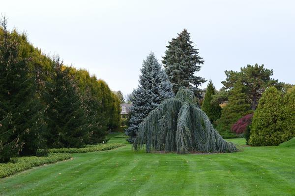 Правильно подобранные газонные злаки - один из главных секретов красивой зеленой лужайки