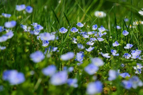 В моде луговые газоны с растениями дикой местной флоры