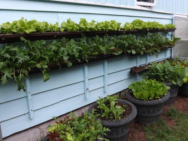 Вертикальная грядка. Фото с сайта juneauempire.com