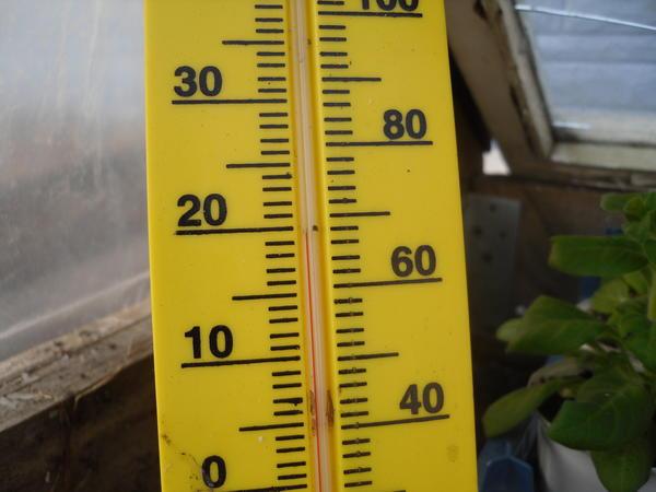 Термометр в парнике нужен обязательно