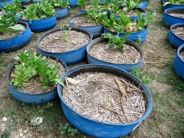 Круглые грядки в бочках. Фото с сайта pinterest.com