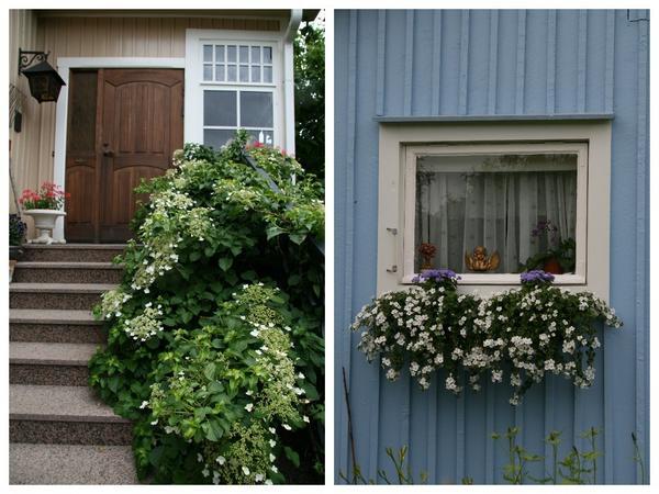 Для финского сада характерно чрезвычайно осторожное отношение к цвету